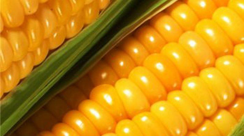 Міністерство економіки оголошує ринкову угоду про обмеження експорту кукурудзи з України у 2020/2021 МР до 24 мільйонів тонн