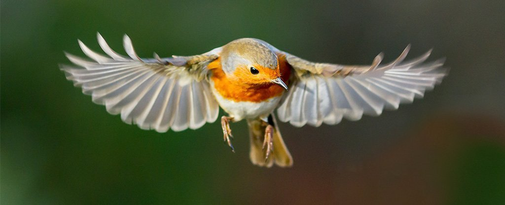 """Birds have an ambiguous """"quantum sense"""".  For the first time, scientists saw it in action"""