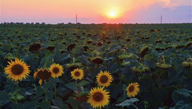 Реформа українських сільськогосподарських угідь матиме глобальне значення