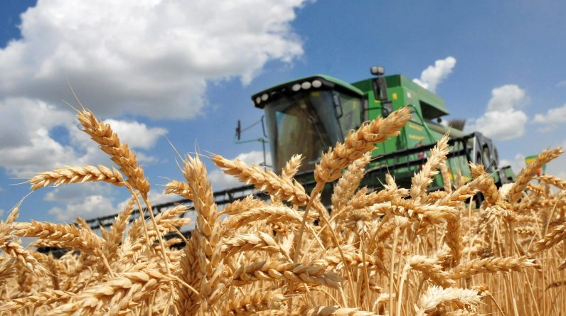 Фокус на бізнесі: Агробізнес в Україні |  Київська пошта